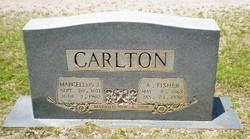Marcellus Judson Carlton