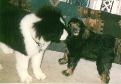 Chewy Dog Robinson