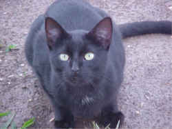Buddy <i>Lane-Ward</i> Cat