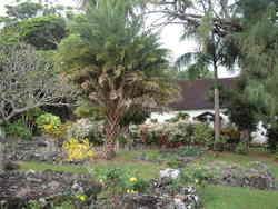Palapala Ho'omau Church Cemetery