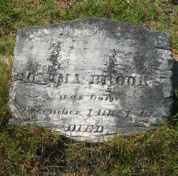 Monima <i>Williams</i> Brooks