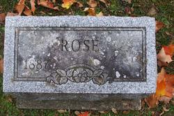 Rose F <i>Garland</i> Snow
