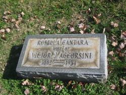 Rosella <i>Cantara</i> Accorsini