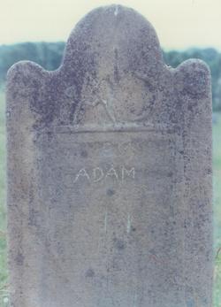 Adam Darting