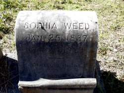 Sophia <i>Blume</i> Weed