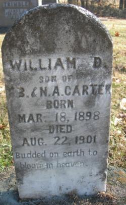 William D Carter