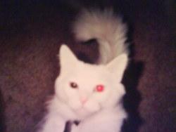 Angel <i>Jones</i> Cat