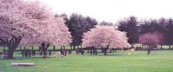 Norbeck Memorial Park