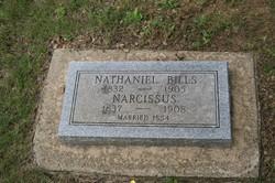 Narcissus <i>Campbell</i> Bills