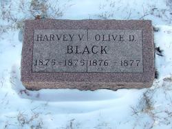 Harvey V. Black