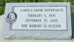 Camelia <i>Savoie</i> Bourriague