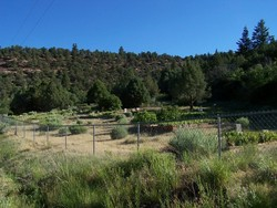 Placerville Cemetery