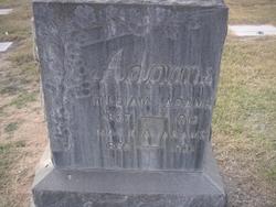 William J Adams