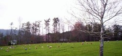 Cherry Springs Memorial Park