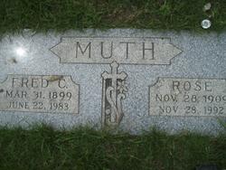 Rose <i>Stohr</i> Muth