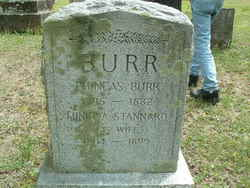 Minirva <i>Stannard</i> Burr