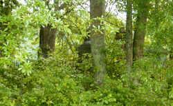 Stallings Cemetery