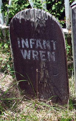 Infant Wren