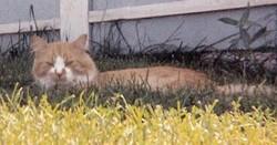 Sammy Cat