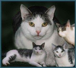 Mauki Cat