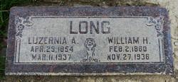 Luzernia <i>Allred</i> Morrell Long