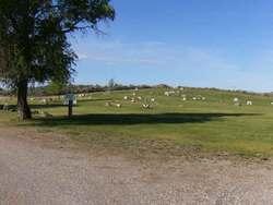 Plano Cemetery