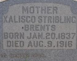Xalisco <i>Stribling</i> Brents