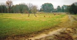 Pontotoc Memorial Park