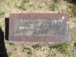 Norbert L Allie