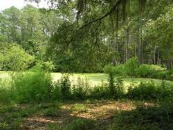 Botany Bay Plantation Grounds