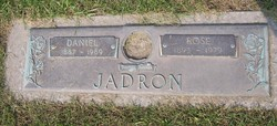 Rose <i>Cisar</i> Jadron