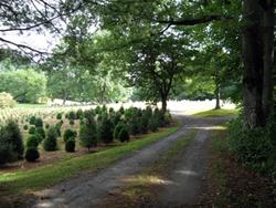 Carroway Cemetery