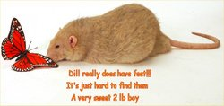Dill Roach