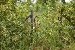 Ebenezer Family Cemetery
