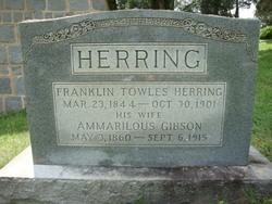 Ammarilous <i>Gibson</i> Herring