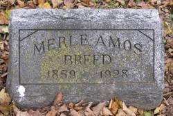 Rev Merle Amos Breed