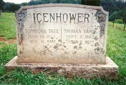 Sophronia <i>Tigue</i> Icenhower