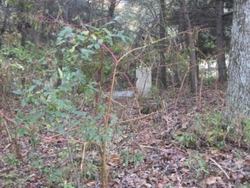 Charles Hutchings Cemetery