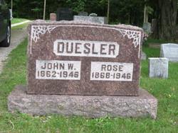 Rosa <i>Mutzfield</i> Duesler