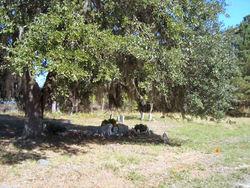 Bethel AME Church Cemetery