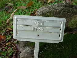 Bet Byrd