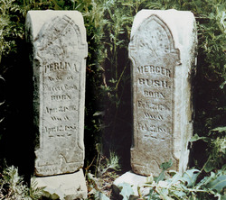 Mercer Bush
