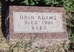 Orin Adams