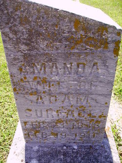 Amanda <i>Williams</i> Surface