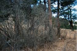 Palmer Canyon Gravesites