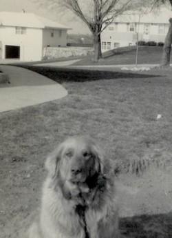Lady Canine Bear Martin