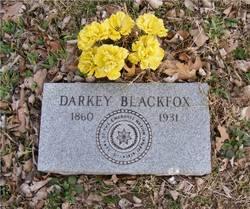 Darkey Blackfox