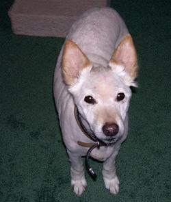 Pup Lesh