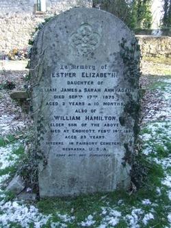 William Hamilton Adams