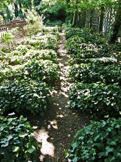Friedhof der Herrnhuter Br�dergemeinde